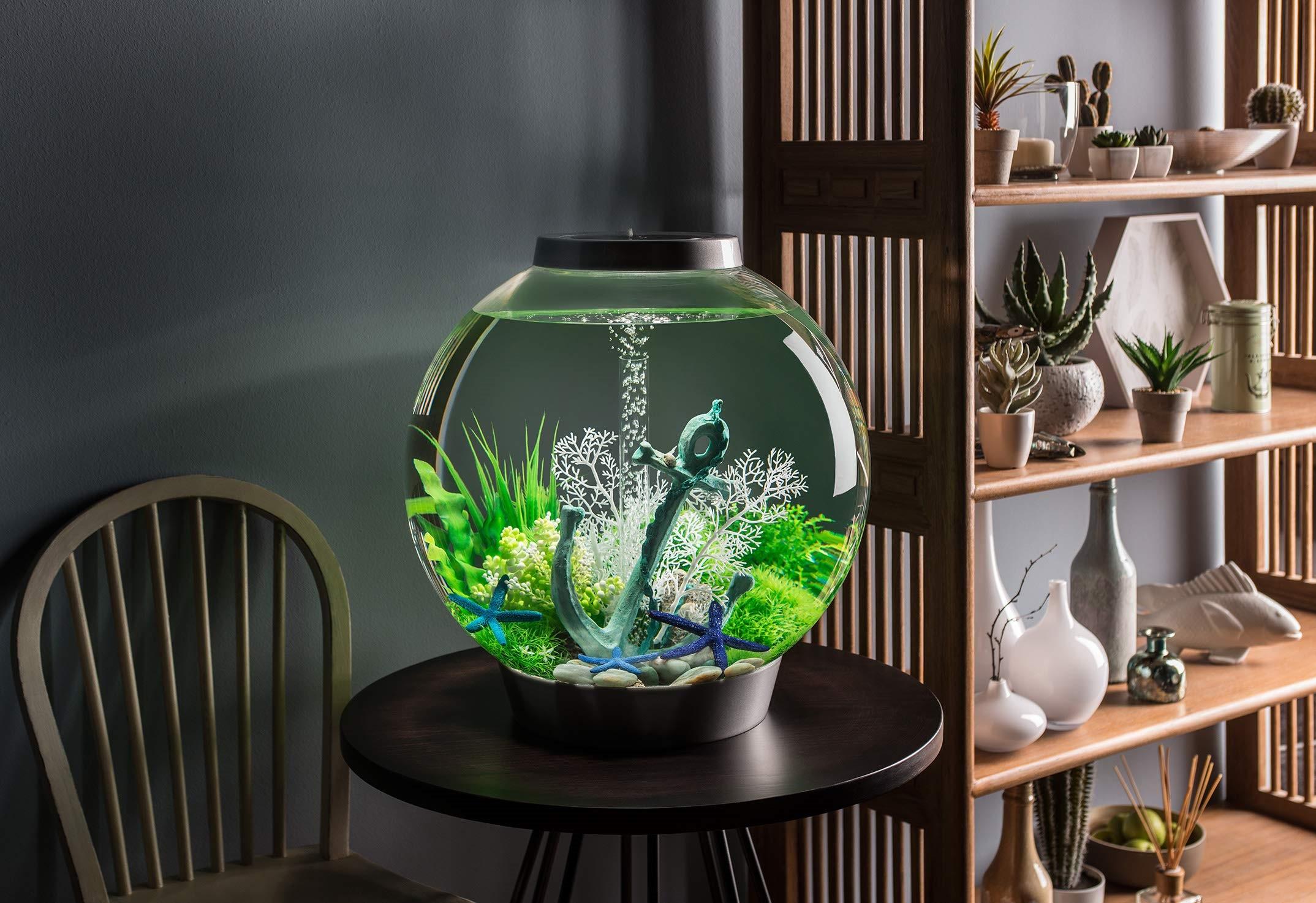 Покупка аквариума: размер, форма и другие критерии выбора «домика для рыбок»