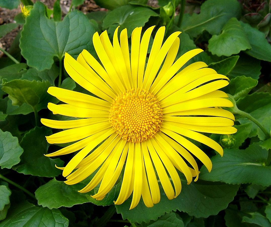 5 красивых цветов для украшения сада