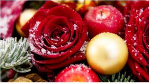 Цветы на Новый год: как выбрать букет