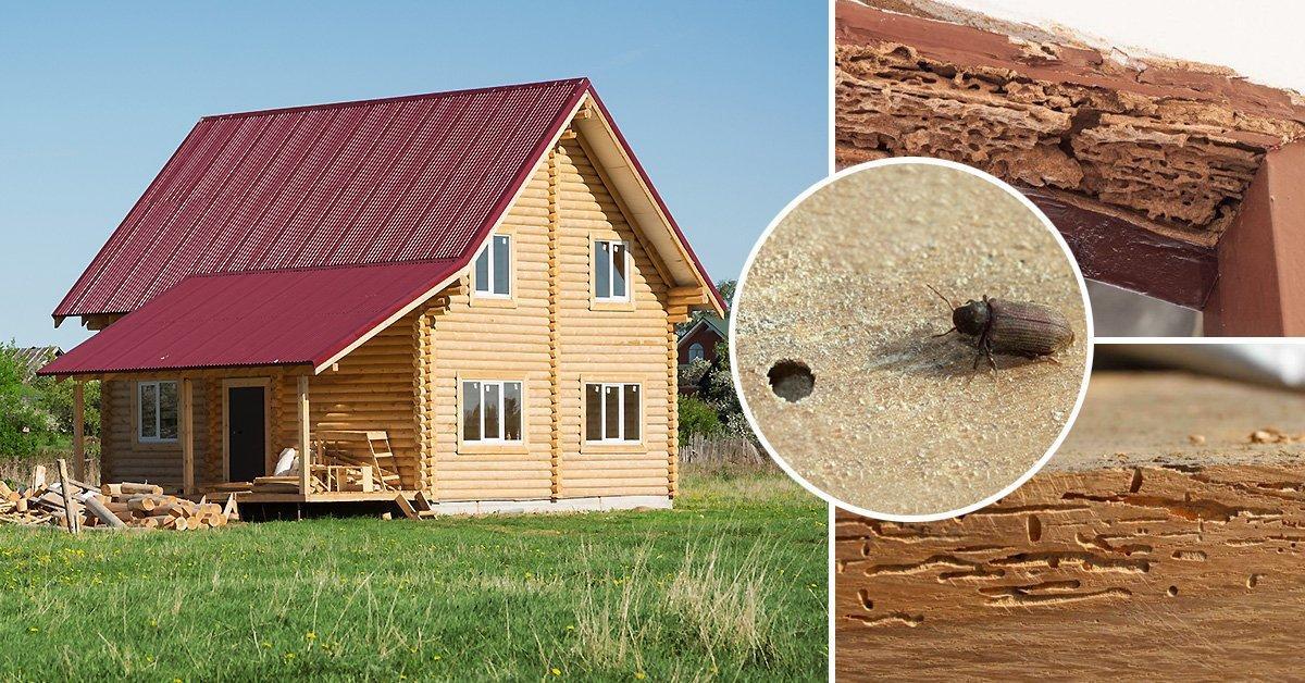 Как избавиться от короедов в деревянном доме