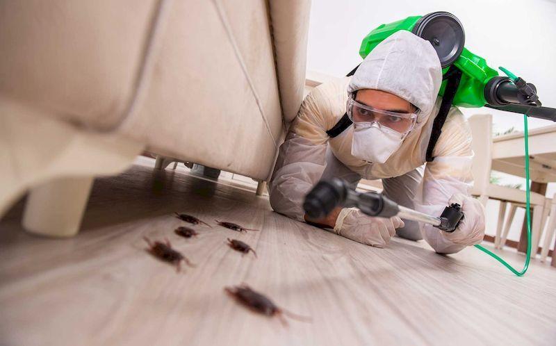 Профессиональная помощь в борьбе с тараканами